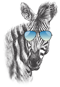 Zebra with sunglasses